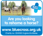 Blue Cross (Shropshire Horse)