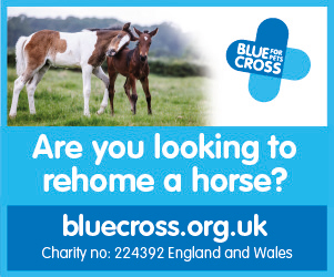 Blue Cross 2020 B (Shropshire Horse)